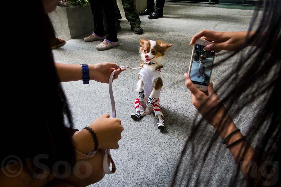 Pet-a-PORTER @ Bangkok, Thailand