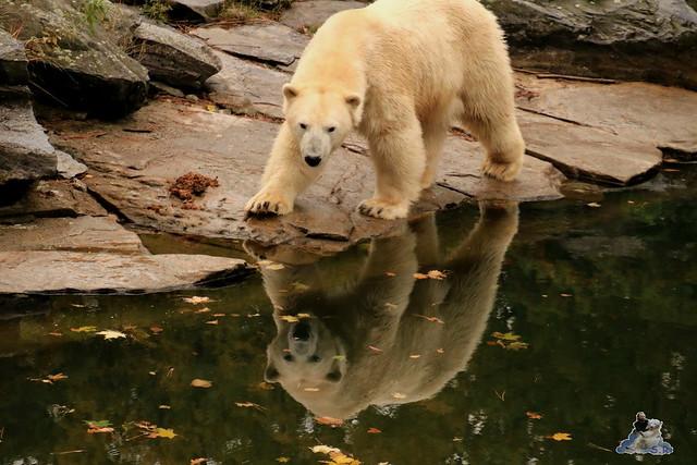Tierpark Berlin 18.10.2015  028