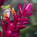 Red-Eyed Tree Frog 3 by Al Meilan