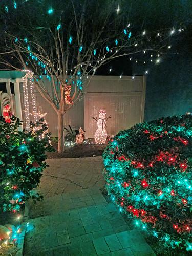 San Diego Christmas Lights Paula Pic 12-27-16 (1)