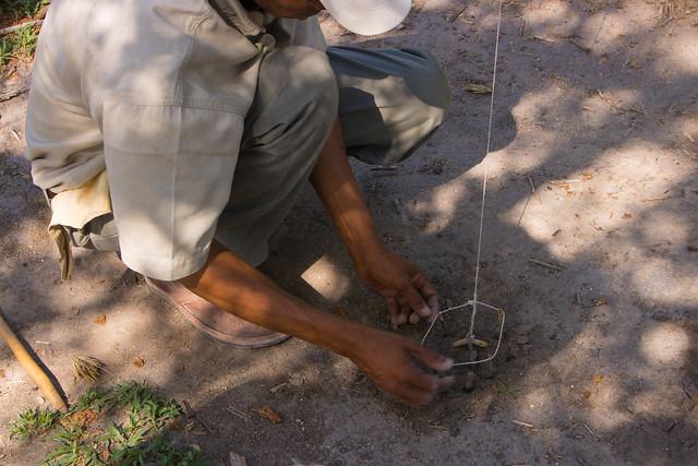 Bushman snare