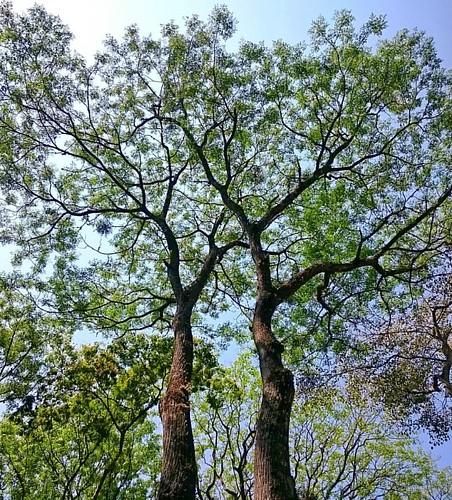 Imensidão 🌳🌱🌀  #árvores #céuazul #natureza #nature #trees #bluesky #verdeolhar #sãopaulo