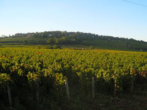 Evening Hike in Vineyards of Beaune