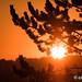 2015_09_30 Differdange Sunrise