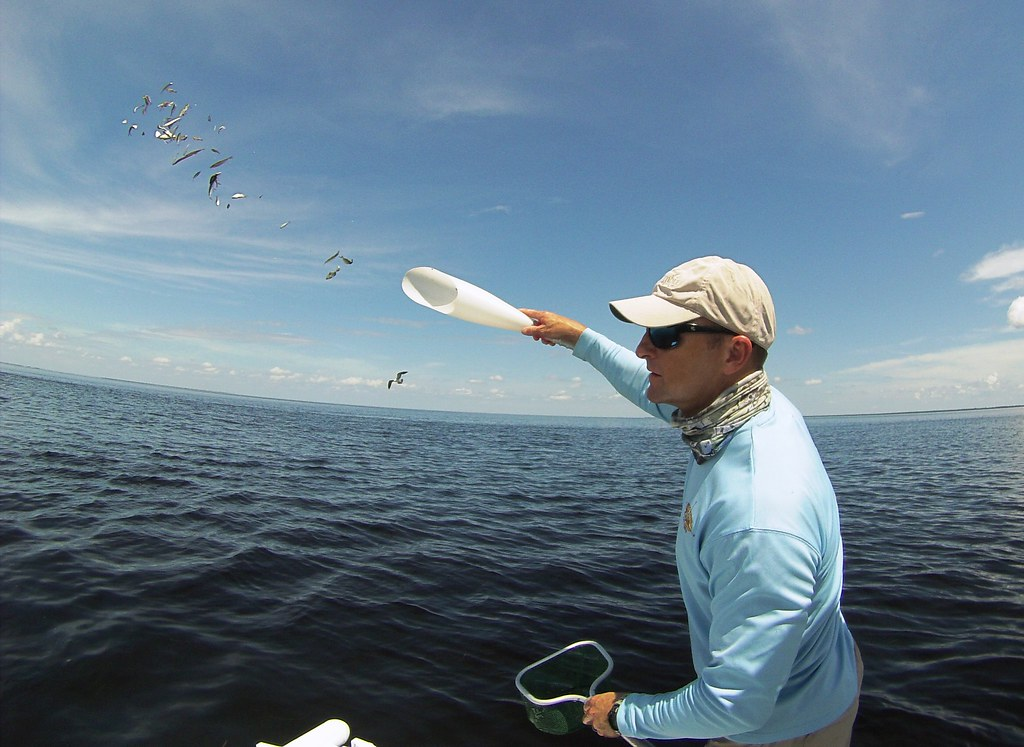 Capt. Rhett Morris of Beyond Borders Outfitters tosses bait fish into Charlotte Harbor, Punta Gorda, Fla., Sept. 21, 2015