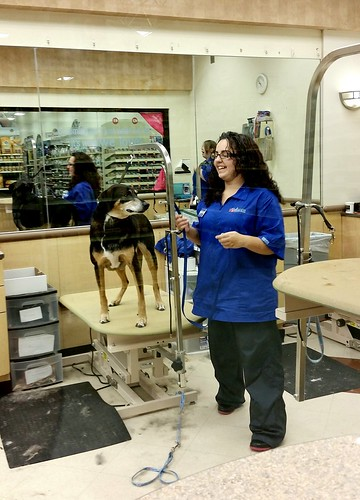 Lapdog Creations PetSmart