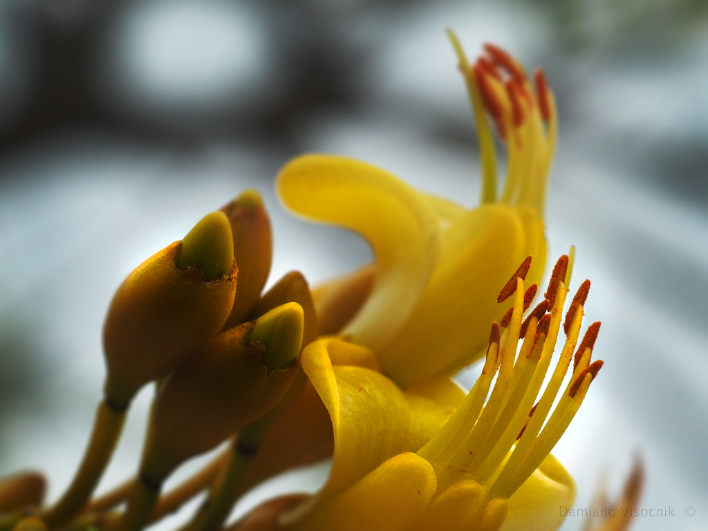 Tree flowers_1_c