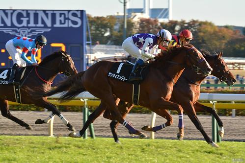 horserace 競馬