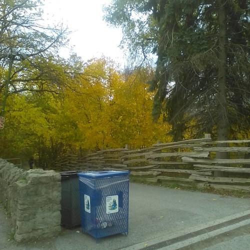 Descending #toronto #riverdaleparkwest #riverdalepark #autumn