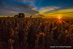 Bean Field Welcomes a New Day