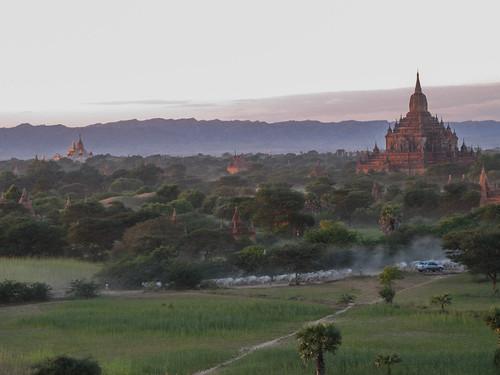 Bagan: un troupeau de vaches pour le coucher de soleil depuis la pagode Pyathada Paya