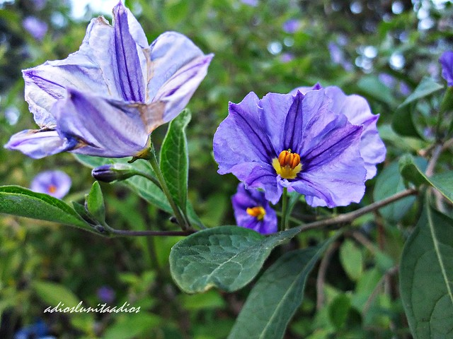 Armonía en azul..., Fujifilm FinePix F200EXR
