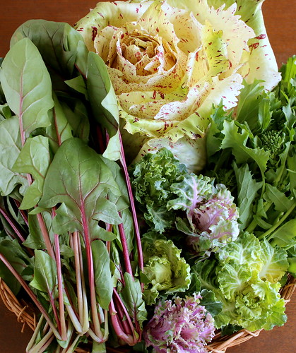 めずらしい野菜たち
