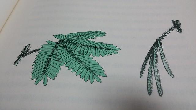 독서노트 | 식물은 알고 있다 (미모사)
