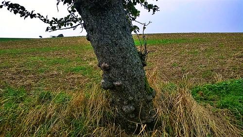 unknown treesure it is when