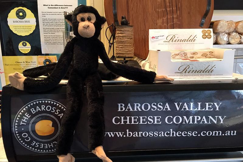 Monkey at the Barossa Valley Cheese Company