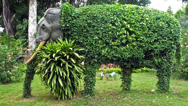 An Elephant Head Tops a Topiary in Cambodia
