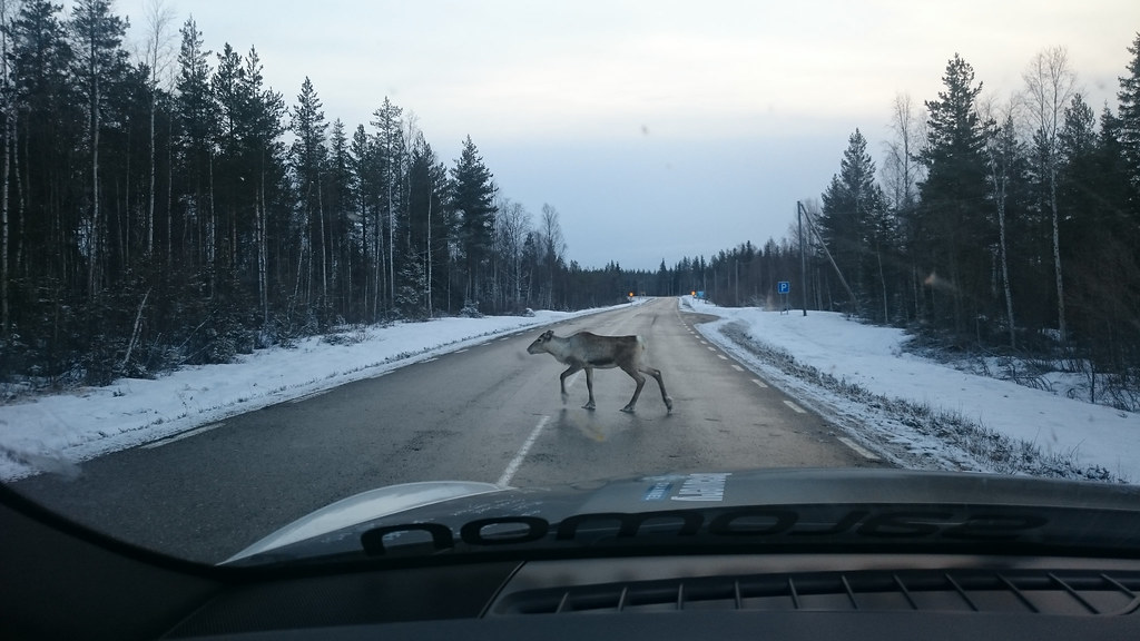 reindeerontheroad