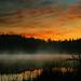 To walk before dawn. by BirgittaSjostedt.