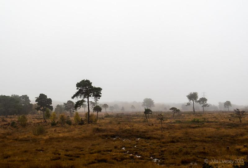 A misty start on Upton Heath