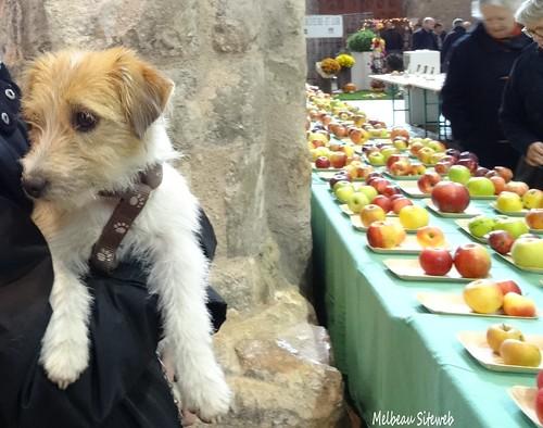 Des bords de l'Eure aux chamignons & fruits d'automne