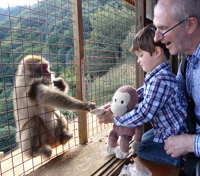 Monkey George feeding a monkey