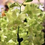 Orchideengarten im Changi Airport Singapur (5)