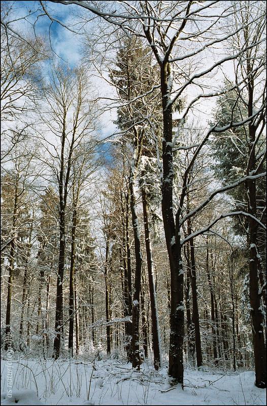 Winterspaziergang am Katzenbuckel (2)