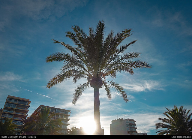 Palm, El Arenal, Mallorca, Spain