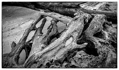 Old Growth Tree Stump Abstract