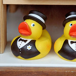 how many grooms would a duck groom groom if a duck groom would groom ducks?