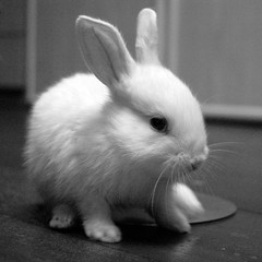 Amber... The Rabbit