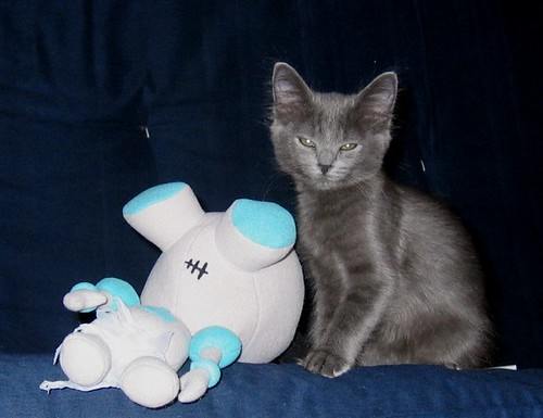Kitty conquers Gir