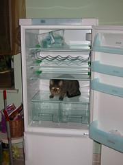 shelf(0.0), furniture(0.0), room(1.0), refrigerator(1.0), major appliance(1.0),