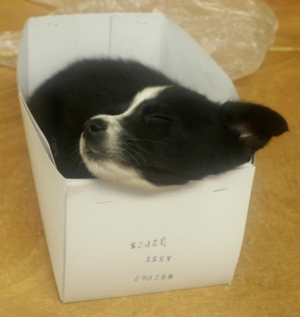 sleeping in the box