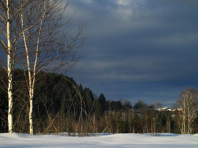 snow winter birch tree birke baum wald forest schnee. Black Bedroom Furniture Sets. Home Design Ideas