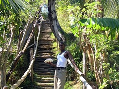 rope bridge(0.0), plantation(0.0), rainforest(1.0), tree(1.0), canopy walkway(1.0), forest(1.0), natural environment(1.0), jungle(1.0),