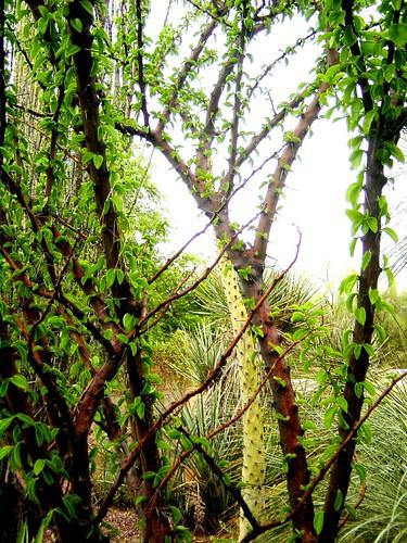 arizona phoenix garden botanical desert dbg