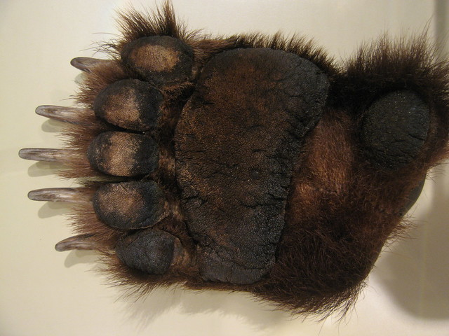 grizzly paw | Flickr - Photo Sharing!
