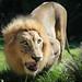 Cincinnati Zoo 8-20-15-8611 by joemastrullo