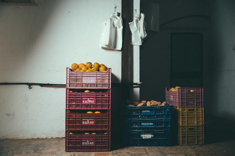 gin-eva-recogida-naranjas-baja-24