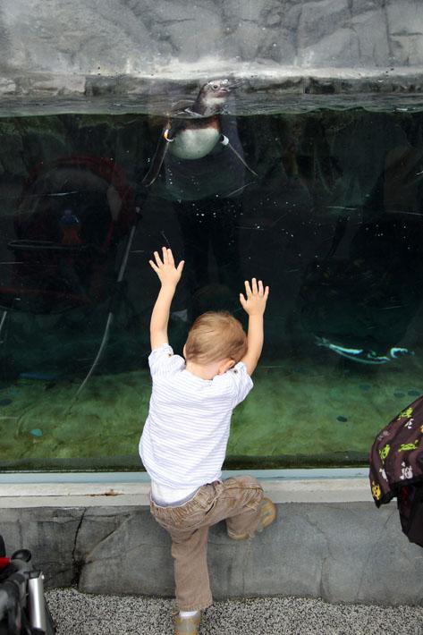 070915_aquarium12