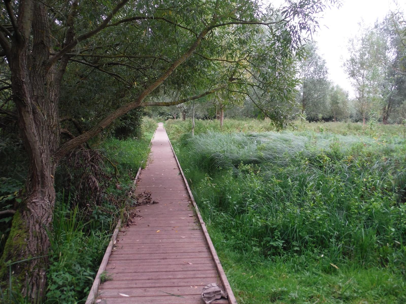 From Pishiobury Park to the Stort Navigation (II) SWC Walk 164 Roydon to Sawbridgeworth via Henry Moore Foundation