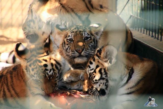 Tierpark Berlin 30.08.2015  0123
