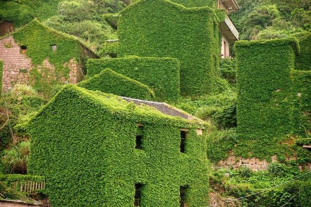 Китайская деревня поглощена растительностью