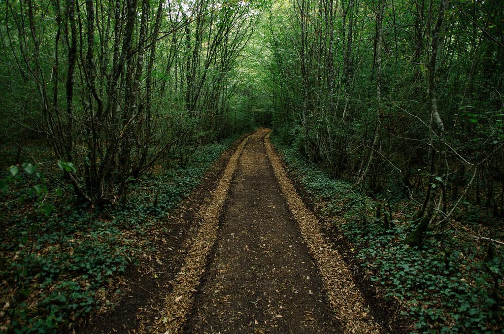 Dans l'Aube, chemins de Compostelle et via Francigena  - Carnet de voyage en France - Sur des rails