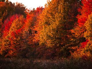 Ohio in Autumn