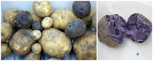 a pile of brown and purple potatoes, and a purple potato cut in half