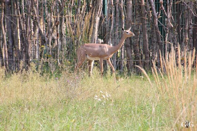 Sonntags-Besuch im Tierpark Friedrichsfelde 04.10.201558