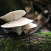 Fall Fungi by U.S. Fish and Wildlife Service - Midwest Region
